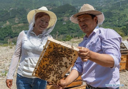 Beehives Set in Orange Orchard in Central China's Hubei